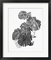 B&W Indoor Plant III Framed Print