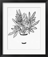 B&W Indoor Plant IV Framed Print