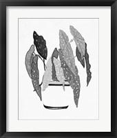 B&W Indoor Plant V Framed Print