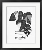 B&W Indoor Plant VI Framed Print