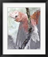 Tropic Parrot II Framed Print
