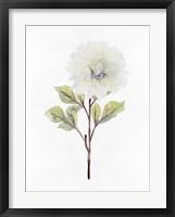 White Blossom I Framed Print
