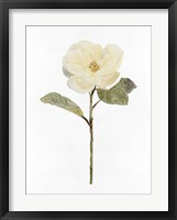 White Blossom II Framed Print
