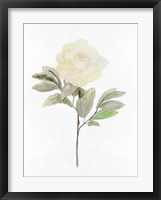 Framed White Blossom V