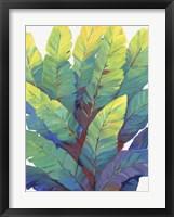 Sunlit Banana Leaves II Framed Print