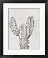 Cactus Study II Framed Print