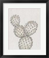 Cactus Study IV Framed Print
