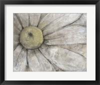 Close-Up Daisy I Framed Print