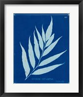 Cyanotype Ferns VII Framed Print