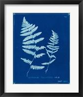 Cyanotype Ferns VIII Framed Print