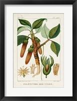Turpin Foliage & Fruit I Framed Print