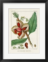 Turpin Foliage & Fruit II Framed Print