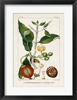 Turpin Foliage & Fruit III Framed Print