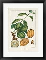 Turpin Foliage & Fruit IV Framed Print