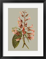 Botanical Array I Framed Print