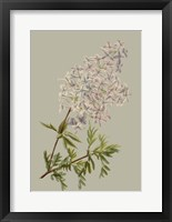 Botanical Array II Framed Print