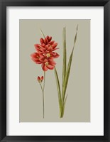 Botanical Array IV Framed Print