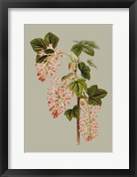 Botanical Array V Framed Print