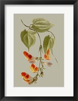 Botanical Array VI Framed Print