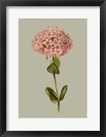 Botanical Array VIII Framed Print