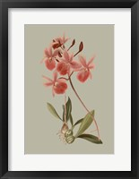 Botanical Array IX Framed Print