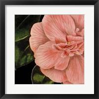 Dramatic Camellia I Framed Print