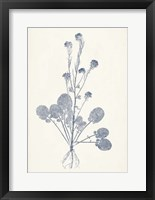 Framed Navy Botanicals VIII