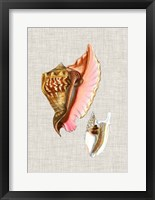 Antique Shells on Linen IX Framed Print