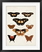 Vintage Butterflies V Framed Print