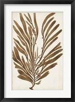Sepia Seaweed II Framed Print