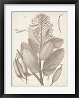 Sepia Exotic Plants I Framed Print