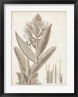 Sepia Exotic Plants II Framed Print