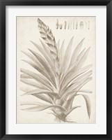 Sepia Exotic Plants III Framed Print