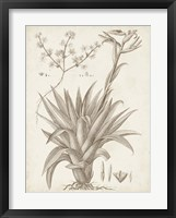 Sepia Exotic Plants IV Framed Print