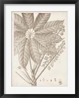 Sepia Exotic Plants V Framed Print