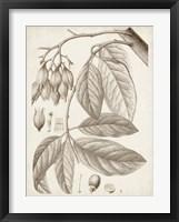 Sepia Exotic Plants VI Framed Print