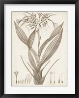 Framed Sepia Exotic Plants VII