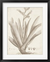 Sepia Exotic Plants VIII Framed Print