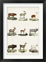 Antique Animal Chart I Framed Print