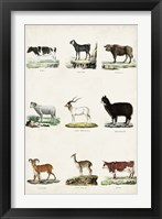 Antique Animal Chart II Framed Print