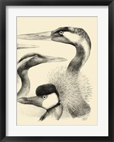 Waterbird Sketchbook I Framed Print
