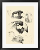 Waterbird Sketchbook III Framed Print