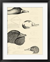 Waterbird Sketchbook IV Framed Print