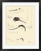Waterbird Sketchbook V Framed Print