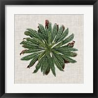 Spherical Leaves II Framed Print