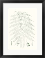 Framed Verdure Ferns I