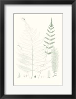 Framed Verdure Ferns II