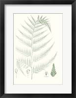 Framed Verdure Ferns III