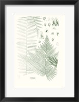 Framed Verdure Ferns V