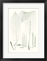 Framed Verdure Ferns VII